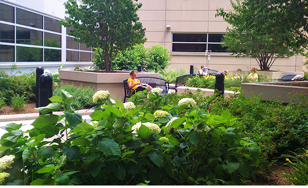 Healing garden research earns award for Ph.D. student - One Arch