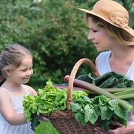 CHSD faculty fellow promotes family vegetable gardening