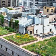 Planning prof, fellow researchers learn how 'green' roofs can best reduce heat wave effects