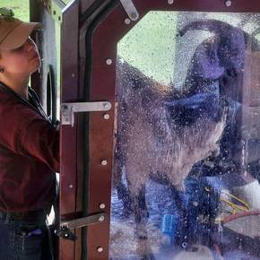 Fab-Lab builds decontamination device for animal flood victims