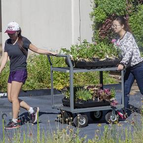 Students grow eight varieties of vegetables on Langford A roof