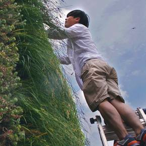 New plants tested in green roof study atop Langford A building