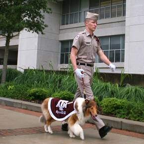 Sophomore CoSci student named handler of Aggie mascot Reveille